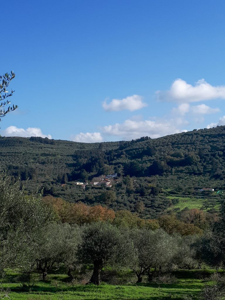Holiday villas, sun and olives in Crete. The beauty of Crete. Olive fields, mountains and sun.